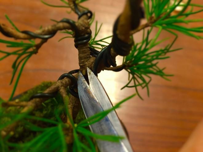 枝を剪定してゆくうちに、いつの間にか刃先がベトベトに・・・><