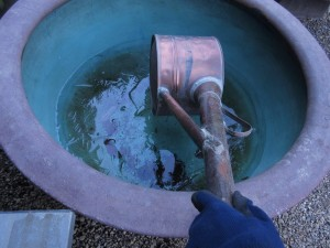 ジョウロで水をあげようとしたところ・・・