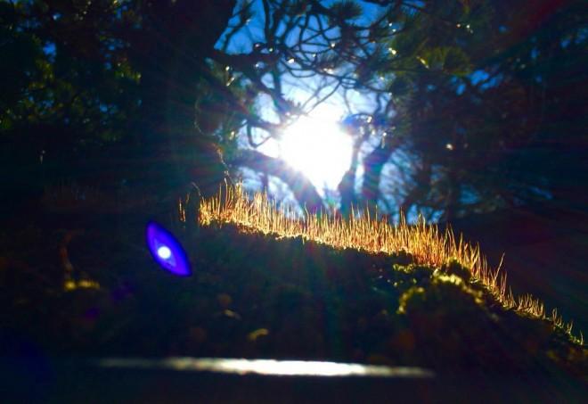 苔が陽だまりの中とてもきれいでした