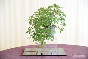 表参道校:高橋 妙子さん 銘「成長」 植物名:アメリカツタ