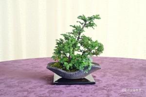 大宮そごう:内藤 洋子さん 銘「京の庭」 植物名:スギ・エゾマツ・ゴールテリア 他