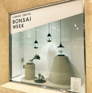 大宮駅構内にあるルミネでは、ショーウィンドウに盆栽を用いたアーティストさんの作品が展示されています!