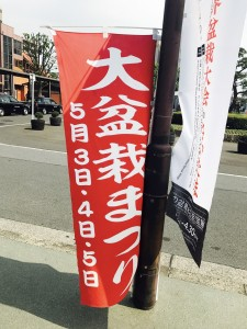 世界盆栽大会の次は、毎年恒例『大盆栽まつり』!!!