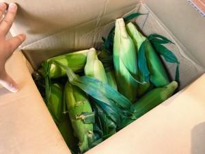 お世話になっている盆栽の苗屋さんから、大量のとれたてトウモロコシを頂きました!