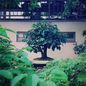 出演する盆栽たちの日常の姿です。