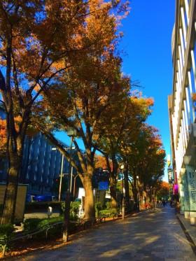 表参道のケヤキも青空に映えてきれいですね♪