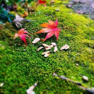 苔の上にモミジと種が落ちていました✨