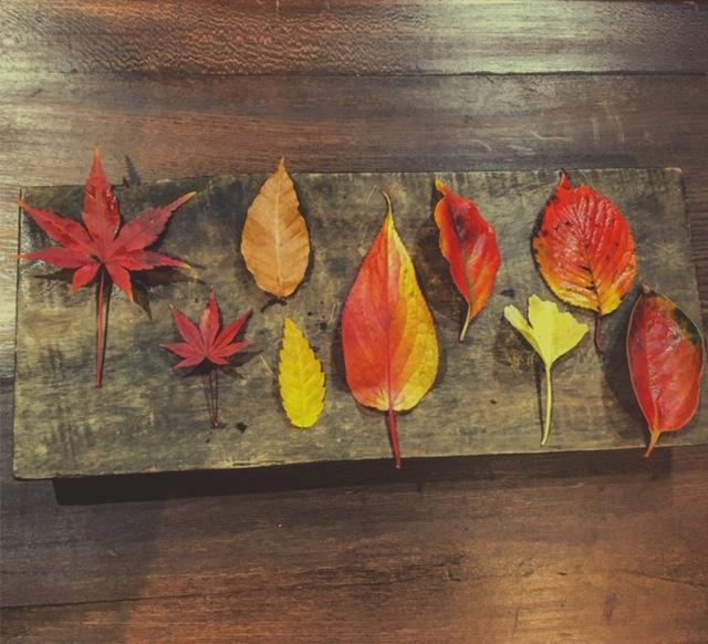落ち葉たち