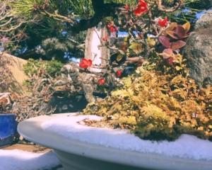 雪の長寿梅