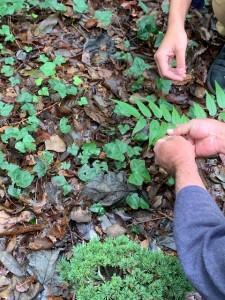 葉をさわる