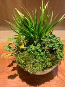 野の花表1