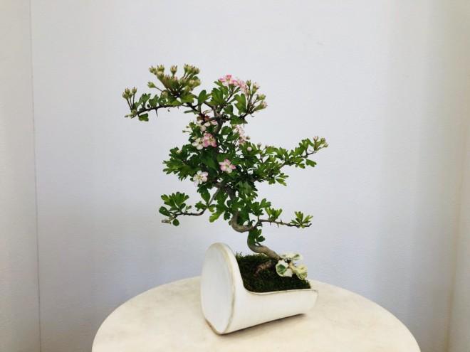 盆栽コンシェルジュ写真