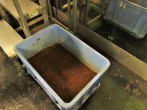 約24時間後に取り出されたできたての有機肥料!